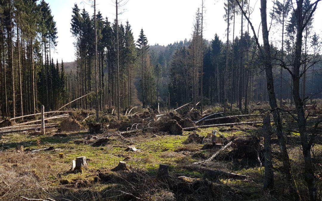 Der Klimawandel und seine Auswirkungen