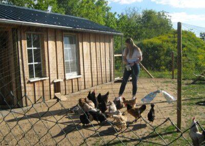 Lena beim Hühnerfüttern